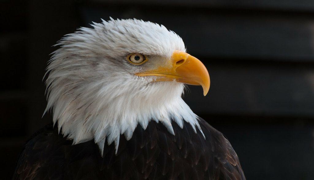 Mentoria sobre Visão da Águia e a Inteligência Emocional